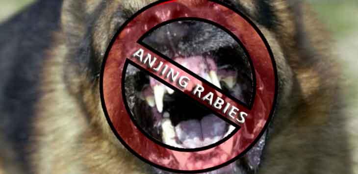 Bocah 10 Tahun Tewas, Diduga Terkena Rabies